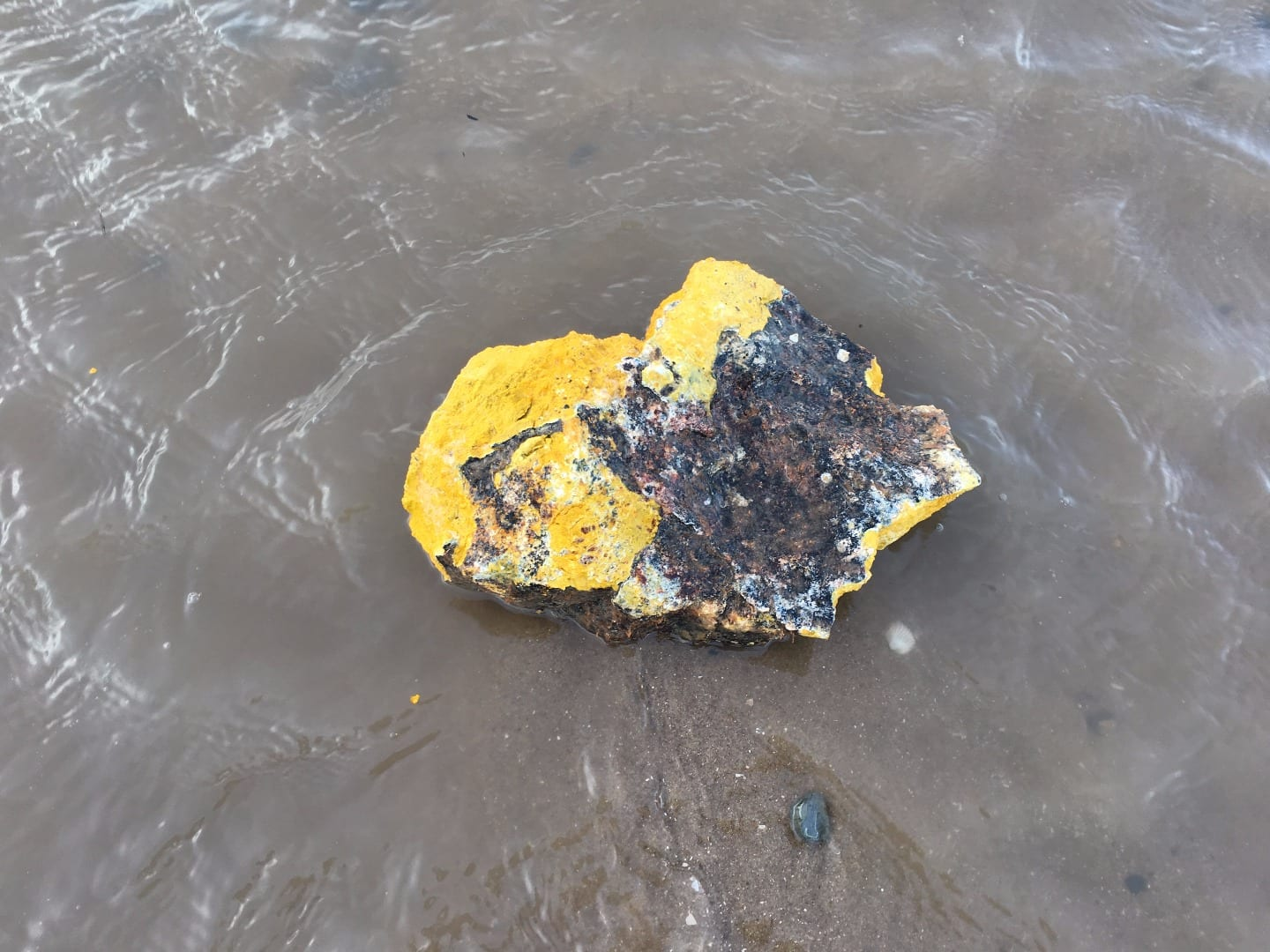 Palm oil at Cleveleys, November 2017. Dog Walkers - Beware of Palm Oil on Beaches