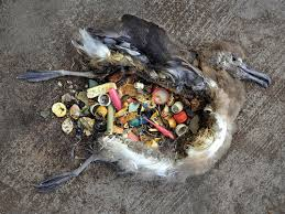 Birds insides, full of plastic