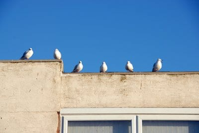 Seagulls make the Seaside
