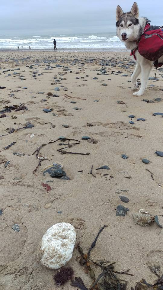 Palm Oil found by Wayne Dixon at Anglesey, March 17 - he's litterpicking his way round the UK with his dog Koda. Dog Walkers - Beware of Palm Oil on Beaches