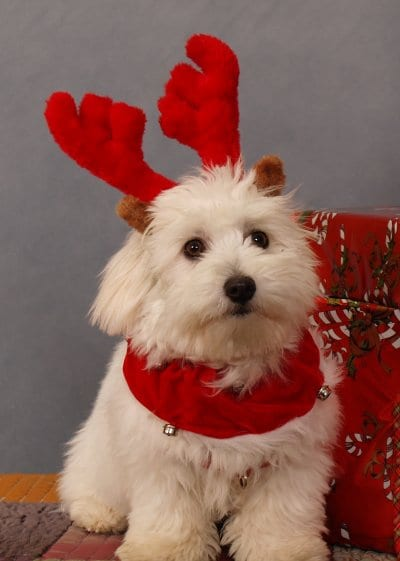 Christmas Cautions for your pets, thanks to Vets 4 Pets Cleveleys