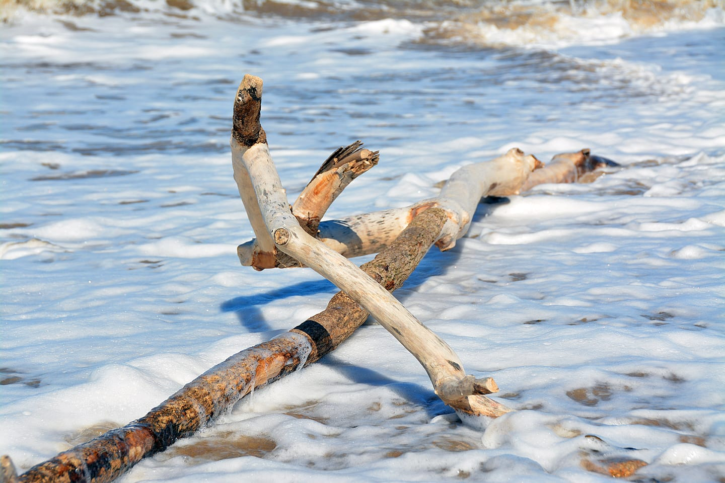 Buy Driftwood on the beach photo from the Seaside Emporium online shop