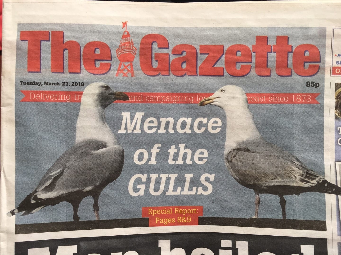 Menace of the Gulls